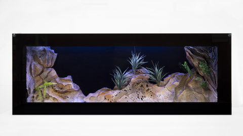 Plasma Aquarium