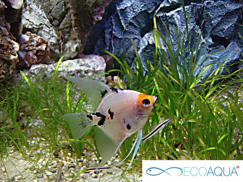Kundenspezifische Dekorationen für Aquarien