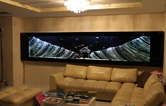 Aquarium an der Wand | Kundenspezifische Aquarien