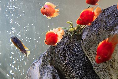TÄGLICH (ODER ALLE 2 TAGE) - Aquarien Bedienungsanletung